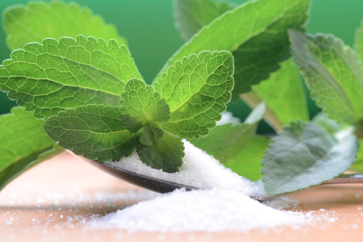 stevia cukrova